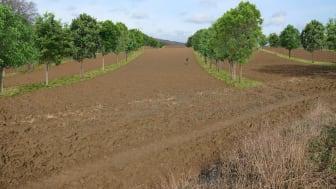 Simulation der Perspektive einer jüngst erfolgten Pflanzung, VRD Stiftung für erneuerbare Energien