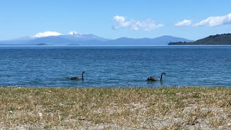 """Taupo-sjön, Nya Zeeland, är betydelsefull för de maoriska stammarna i området. Förhandlingar kring kommersiell verksamhet där sker mellan maorierna, myndigheter och näringsutövare. (Carina Green, CBM, i sin artikel """"Att kombinera olika perspektiv"""")."""