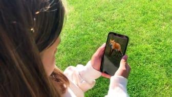 Mysteriet i parken - Träffa räven