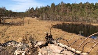 Eklidens naturreservat, i Ale kommun, växer med 40 hektar. Foto: Länsstyrelsen i Västra Götaland