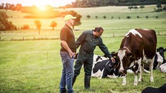 Bæredygtig mælkeproduktion: 9 ud af 10 Arla-landmænd ombord fra starten