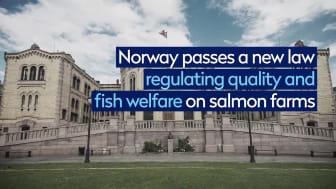50 years of salmon farming