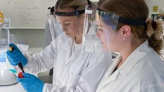Ebba Stål och Frida Wallbom, studenter på programmet Biovetenskap - Molekylär biodesign, förändrar bananflugans DNA.