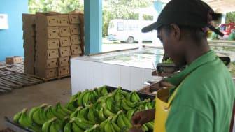 Fairtrade-certifierade producenter & produkter