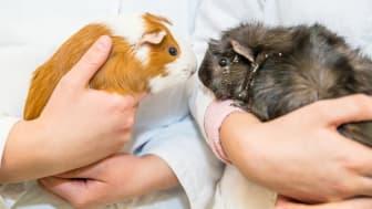 Lärande Partner lanserar unik utbildning tillsammans med Zoobranschens Riksförbund