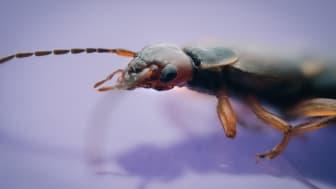 A7RII, Buglife