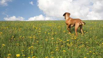 En hundgård ger hunden stor frihet om den används på rätt sätt.