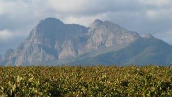 Miljövänlig nyhet! Fairtrade Pinotage på PET från Sydafrika