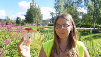 Humla infångad för observation av studenten Cecilia Åström. Foto: Natuschka Lee