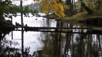 2018-10-15--16 Landskapsforum 2018: Vattnet i det brukade landskapet (foto: Ylva Nordin)