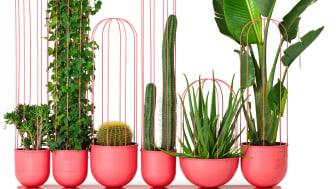 Cacti planter pink, design Anki Gneib