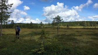 Från naturreservatet Päggonätto, som ligger långt norrut intill riksgränsen mot Norge, kan du se en vid utsikt över sluttande myrar med blånande berg i fjärran.