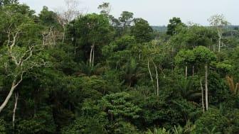 Omkring 60 procent af Amazonas regnskoven ligger på brasiliansk jord. Foto: Mongabay