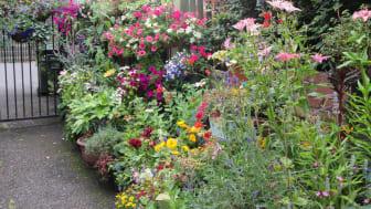 Alleyways bloom in Castleton and Rochdale