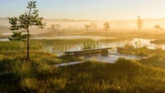 Estland bjuder på mycket orörd natur som kan upplevas till fots t.ex. i nationalparken Soomaa. Foto: Sven Zacek