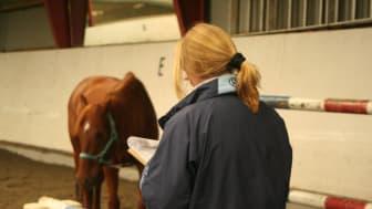 Hästsport på hästens villkor!   Horse Agility Club Sweden