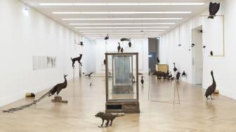 Petrit Halilaj, Poisoned by men in need of some love (2013), installation view at Bundeskunsthalle Bonn. Credit: Simon Vogel / Cologne