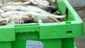 Fiskeavtal mellan EU och Norge för 2015  klart
