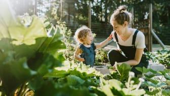 Yhä useampi vanhempi viljelee yhdessä lastensa kanssa