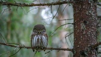 Kontoret på en stubbe i skogen? Läs artikeln i DN -  Morgondagens kontor 2020-12-08