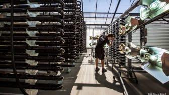Simris Algs algfarm i Hammenhög består av 2000 kvm växthus