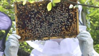 I bikupan finns hälsamma produkter som pollen, propolis och honung. Foto Anna Lind Lewin.