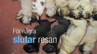 Stoppa hundsmugglingen
