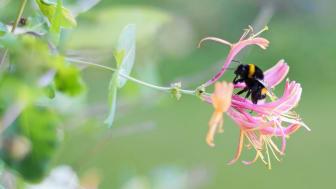 Pollinerande insekter ska flytta in hos Gavlegårdarna när Högskolan hjälper till