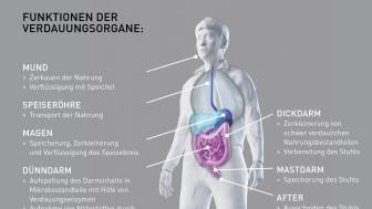 Funktionen der Verdauungsorgane: Vom Essen bis zum Ausscheiden