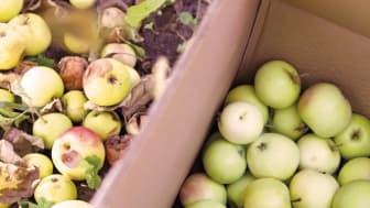 En personbil kan köra nästan 1 mil på bränslet från 5 kg äpplen.