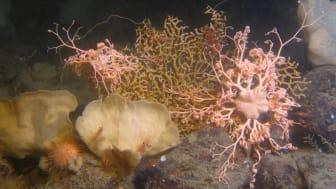 Rödlista 2020 -Biologisk mångfald i Västerhavet