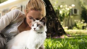 Die Beziehung zwischen Katzen und Menschen ist etwas ganz besonderes, wir teilen unser Leben und all die schönen Momente voller Zuneigung mit ihnen.