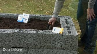 Odla betong