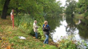 Utökad period för fiskeförbud i Svartån