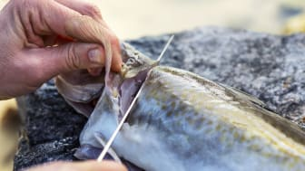 Strongest January for whitefish exports ever recorded.