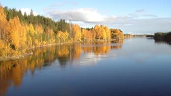 Gold of Lapland satsar på september!