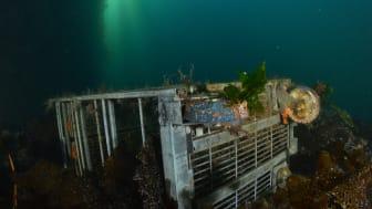 Ryddedugnad - under vann