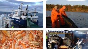 Så ska yrkesfisket möta framtiden – ny strategi för svenskt yrkesfiske