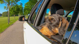 Sembo lanserar hundvänliga roadtrips