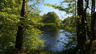Ubbalt naturreservat. Foto: Helén Clargården