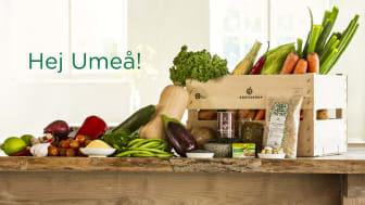 Årstiderna gör Umeå mer veganskt