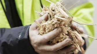 Biomassa är en viktig råvara för produktion av värme och energi
