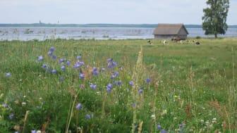 Betesmarker och ängar vid Hornborgasjön. Foto: Ida Edgren