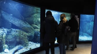 Besökare vid akvariet med miljöer hämtade från Släggö, en havskatt simmar förbi.  Till höger ses akvariet med mjukbotten. Fotograf: Roger Jansson / Havets Hus