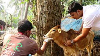 Tiergesundheit sollte im Kontext von One Health umfassend gedacht werden. (Foto: APOWA)