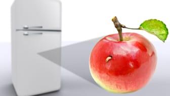 Krönika: När masken i  mitt kylskåp skickar spam