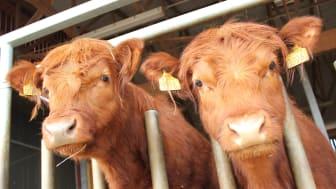 Vårbruksdagen med fullt ös på Hästa – 1 maj