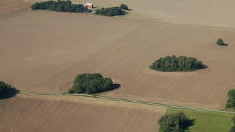 Exempel på små lövbestånd i ett mellansvenskt jordbrukslandskap (Uppland). Foto: Sara Cousins