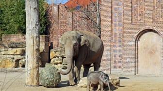 Elefantenbaby im Zoo Leipzig - Foto: Nathalie Hempel