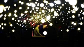 Höstljus på Sofiero 25 oktober-15 november. Foto: Stefan Ed